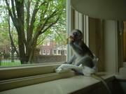 mola and lalano capuchin monkeys ready